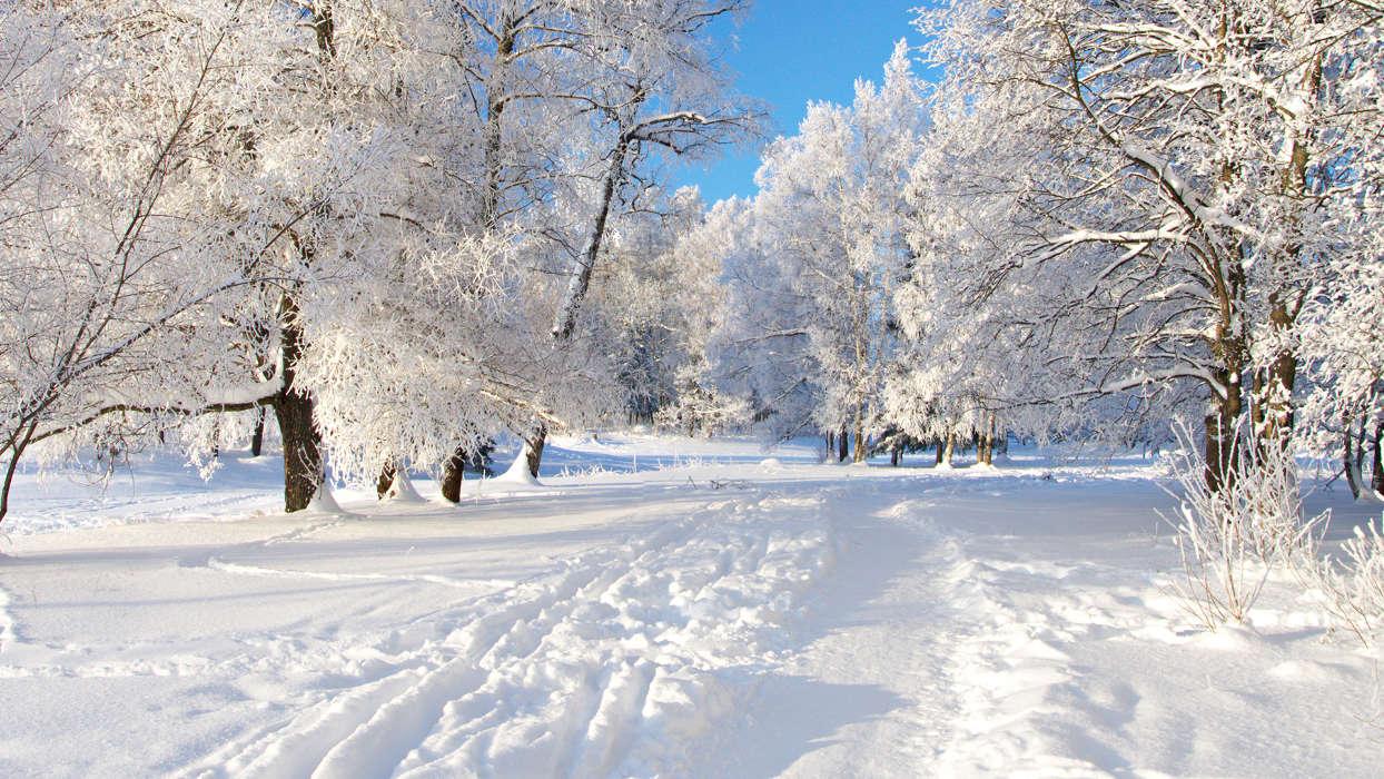 Paysage de Noël : forêt sous la neige